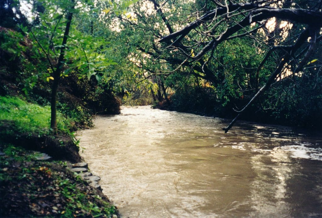 Barron creek in palo alto
