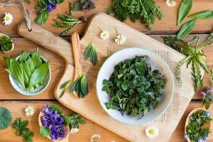 Wild foods in the kitchen
